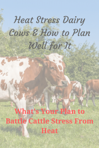 Heat Stress Dairy Cows & How to Plan Well for It